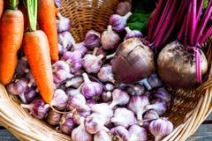 Fresh Organic Vegetables in basket. Autumn Harvest Concept Royalty Free Stock Image