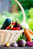 Fresh Organic Vegetables in basket. Autumn Harvest Concept Stock Photos
