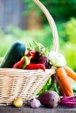 Fresh Organic Vegetables in basket. Autumn Harvest Concept Stock Photos