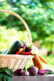 Fresh Organic Vegetables in basket. Autumn Harvest Concept Stock Images