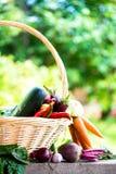 Fresh Organic Vegetables in basket. Autumn Harvest Concept Stock Images