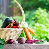 Fresh Organic Vegetables in basket. Autumn Harvest Concept Stock Photo