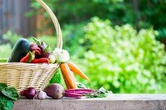 Fresh Organic Vegetables in basket. Autumn Harvest Concept Royalty Free Stock Photos