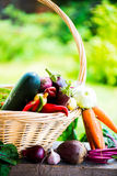 Fresh Organic Vegetables in basket. Autumn Harvest Concept Royalty Free Stock Photo