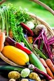 Fresh Organic Vegetables in basket. Autumn Harvest Concept Stock Image