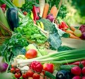 Fresh organic vegetables closeup. Fresh organic vegetables - vegetables in create and in wicker basket Stock Image