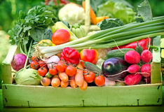 Fresh organic vegetables in crate Stock Image
