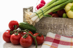 Fresh organic vegetables from the garden, tomatoes, cucumber, on Stock Photography