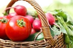 Fresh organic vegetables. Organic vegetables-gardening-agriculture Stock Photo
