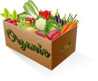 Fresh organic vegetables Royalty Free Stock Image