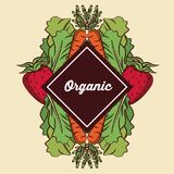 Fresh Organic vegetables. Organic vegetables icon vector illustration graphic design royalty free illustration