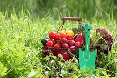 Fresh organic vegetables outdoor Stock Photo