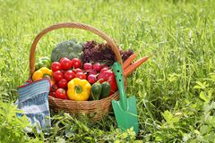 Fresh organic vegetables outdoor Stock Image