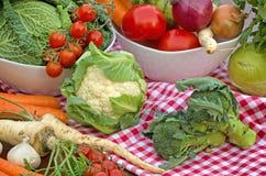 Fresh organic vegetables Stock Images