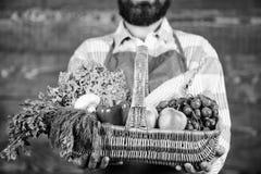 Fresh organic vegetables in wicker basket. Farmer presenting fresh vegetables. Farmer with homegrown vegetables in. Basket. Man bearded gardener presenting eco royalty free stock image