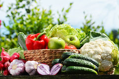 Fresh organic vegetables in wicker basket in the garden Stock Image