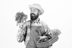 Fresh organic vegetables wicker basket. Hipster gardener wear apron carry vegetables. Man bearded presenting vegetables stock images