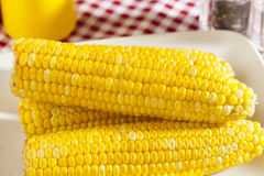 Fresh Organic Yellow Corn on the Cob Royalty Free Stock Image