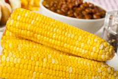 Fresh Organic Yellow Corn on the Cob Stock Images