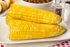 Fresh Organic Yellow Corn on the Cob Stock Photography
