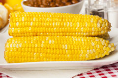 Fresh Organic Yellow Corn on the Cob Royalty Free Stock Images