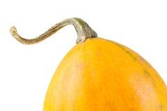 Fresh organic yellow decorative pumpkin Stock Photography