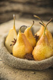 Fresh Organic Yellow Pears. Yellow ripe and juicy pears Stock Images
