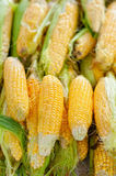 Fresh, organic, yellow sweet corn with leaves Stock Photos