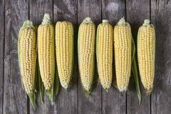 Fresh organic yellow sweet corn on wooden table. Top view stock photo
