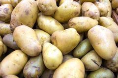 Fresh organic young potatoes Stock Images