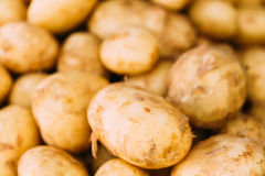 Fresh Organic Young Raw Potatoes For Selling At Vegetable Market Royalty Free Stock Photos