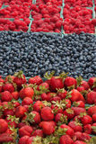 Fresh, organically grown berries. Raspberries, blueberries, and strawberries Stock Image