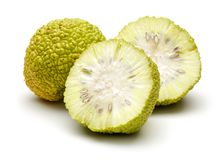 Fresh osage oranges or Maclura isolated. On white background royalty free stock photography