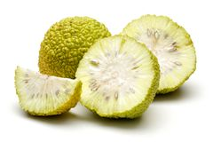 Fresh osage oranges or Maclura isolated. On white background royalty free stock photo