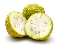 Fresh osage oranges or Maclura isolated. On white background stock images
