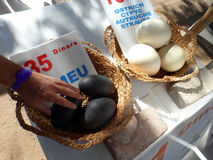 Fresh Ostrich and Emu Eggs For Sale Stock Images
