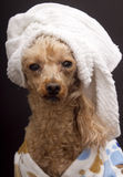 Fresh Out of The Shower Stock Image