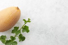 Fresh oval melon and flowering vine on white stone background stock image