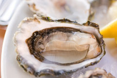 Fresh oyster. Fresh half-shell oyster on the  plate in Seattle restaurant. Shallow DOF Stock Photos