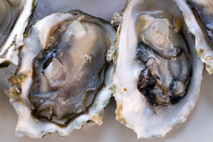Fresh oyster. Fresh half-shell oyster on the  plate in Seattle restaurant. Shallow DOF Stock Image