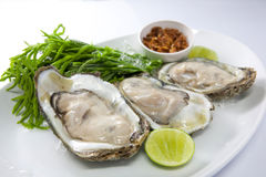 Fresh Oyster. With lime and fried red onion, Delicious Seafood Stock Photos