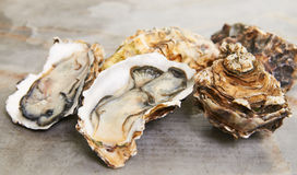 Fresh oyster Royalty Free Stock Photo