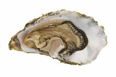 Fresh Oyster Stock Images