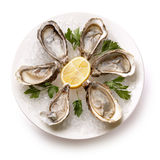 Fresh oyster in the bowl with ice. Food Stock Photos