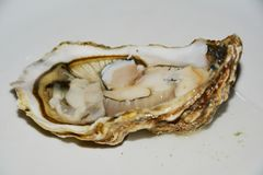 Fresh oyster in brown hues royalty free stock photography