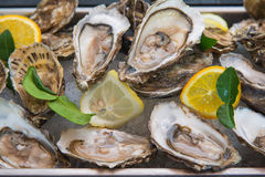 Fresh oyster on buffet line Stock Images