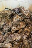 Fresh oyster on buffet line Stock Photos
