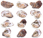 Fresh oyster Royalty Free Stock Images