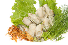 Fresh  oyster decoration. On dish Stock Photography