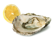Fresh oyster and half of lemon Royalty Free Stock Photos